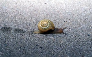 snail_animals_photos