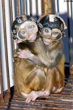 scimmiettelaboratori