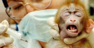 vivisezione_GB