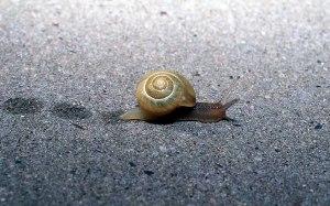 snail_animals_photos