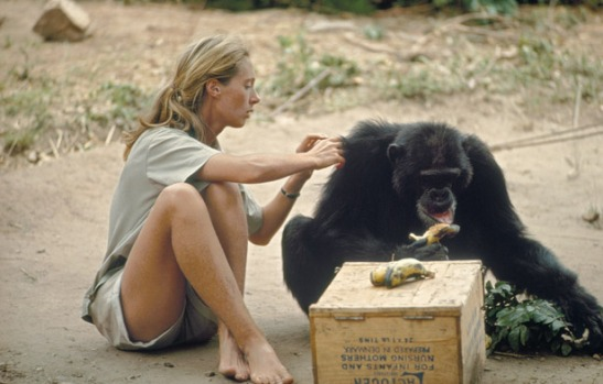 jane-goodall-photograph-by-hugo-van-lawick-ng